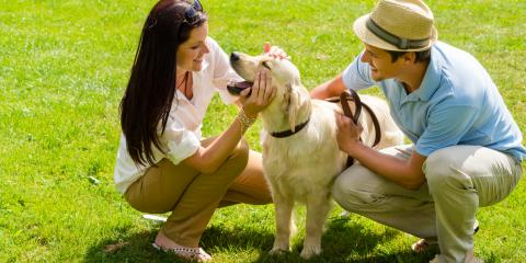 How to Make Grooming a Positive Experience for Your Dog, 4, Tennessee