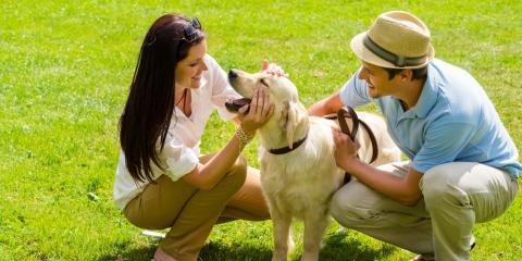 3 Warning Signs Your Dog Has Heatstroke, Mililani Mauka, Hawaii
