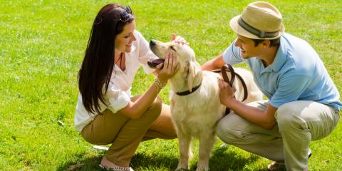 3 Tips for Protecting Your Pet from Summer Heat, Newport-Fort Thomas, Kentucky