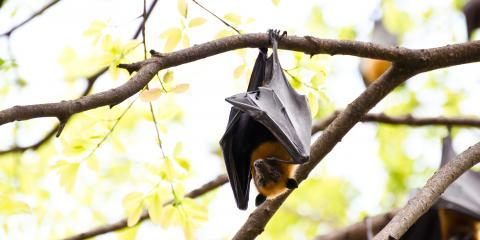 4 Ways Bats Benefit the Environment, Miami, Ohio
