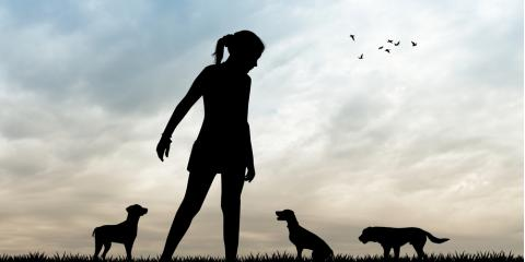 Pet Sitter Vs. Dog Boarding: What's the Difference?, Sunrise, Florida