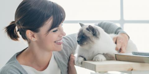 HVAC Contractor Offers 3 Maintenance Tips for Homes With Pets, Urbana, Ohio