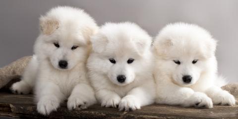 Local Veterinarians Share 3 Vaccines Your Puppy or Kitten Needs, Buckeye Lake, Ohio