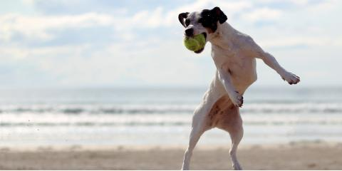 3 Fun Ways to Exercise With Your Dog, Ewa, Hawaii