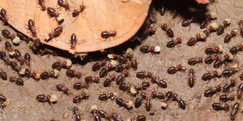 How Often Should You Check for Termites?, North Buck Shoals, North Carolina