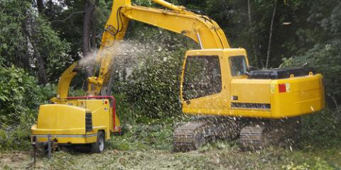 What You Should Ask Before You Hire a Tree Removal Company, Anchorage, Alaska