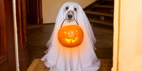Dog Halloween Costume Do's & Don'ts, Wahiawa, Hawaii
