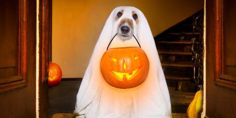 4 Tips for a Pet-Safe Halloween, Anchorage, Alaska