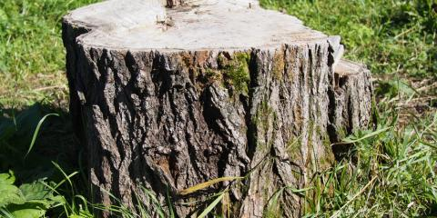 3 Interesting Stump Removal Facts, Newburgh, New York
