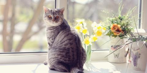 3 Ways to Protect Flower Arrangements From Your Pets, Branford Center, Connecticut