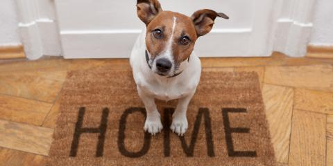 3 Tips for Introducing Your Dog to Your New Apartment, Lexington-Fayette Central, Kentucky
