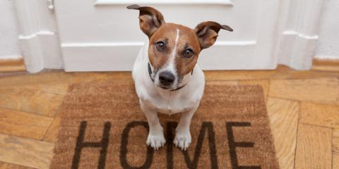 3 Ways to Prepare Your Dog for a Kennel Stay, Sanford, North Carolina