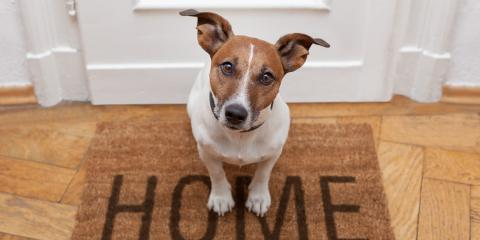 Should I Leave My AC on for My Pets?, Yonkers, New York