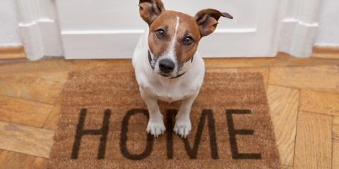 Should You Allow Pets in a Rental Property?, Pukalani, Hawaii