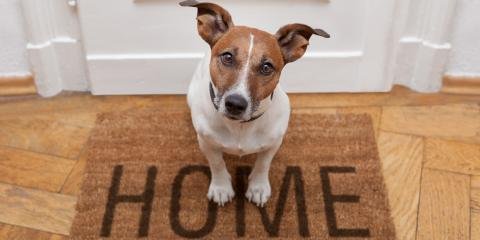 3 Pet-Friendly Flooring Options, Lahaina, Hawaii