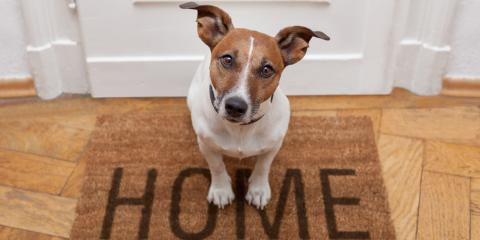 3 Tips For Choosing Pet-Friendly Flooring, Prairie du Chien, Wisconsin