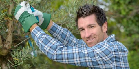3 Times You Should Hire a Tree Pruning Expert, South Brazos, Texas