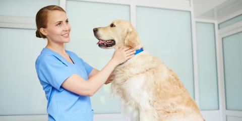 Wards Corner Animal Hospital, Veterinarians, Health and Beauty, Loveland, Ohio
