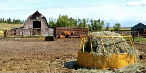 What You Need to Know About Hay Feeders, Bolivar, Missouri