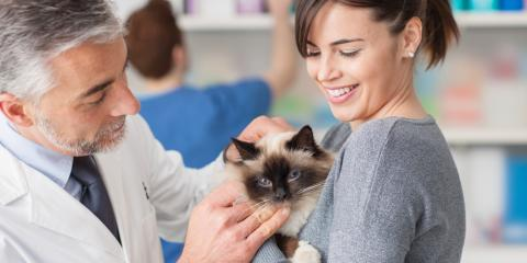 3 Reasons to Consider Pet Microchipping, Columbia, Missouri