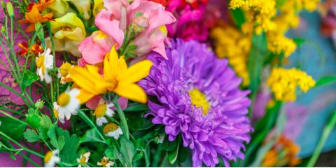 FAQs About Summer Perennial Flowers , Plymouth, Minnesota