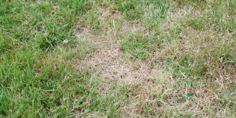 3 Landscaping Issues Nebraska Homeowners Face, Lincoln, Nebraska