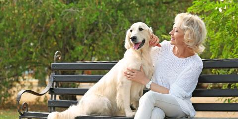 3 Pet Care Tips for Older Dogs, Statesboro, Georgia