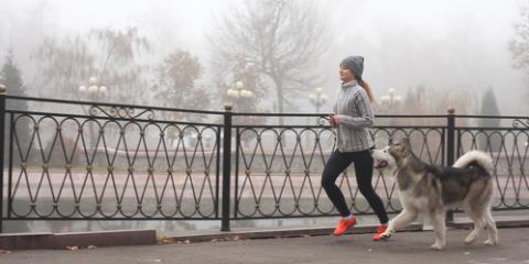 A Pet Care Expert's 3 Dog Exercise Tips for Winter , Covington, Kentucky
