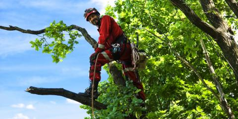 5 Tree Services to Arrange Now for a Healthy Yard in Spring & Summer, Snow Hill, Missouri