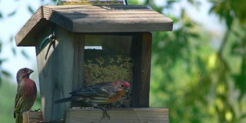 Top 3 Bird Seed Feeders for Your Yard, Conyers, Georgia
