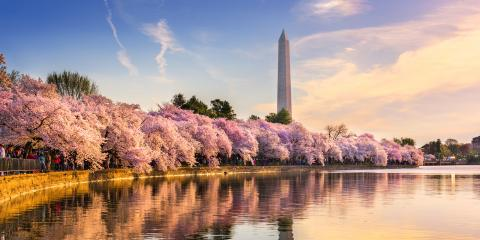 3 Reasons to Visit Washington, DC in the Spring, Jersey City, New Jersey
