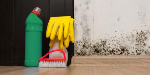 3 Reasons to Leave Mold Remediation to the Professionals, St. Augustine, Florida