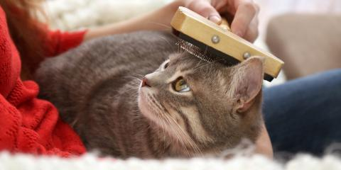 4 Common Pet Grooming Mistakes You Should Avoid, Miami, Ohio