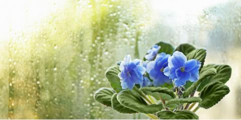 5 Ways to Deal With Window Condensation, Spring Valley, New York
