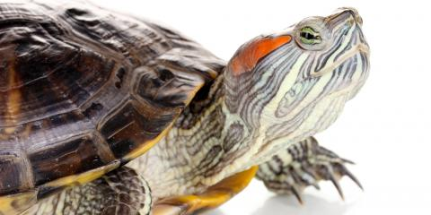 Do's & Don'ts of Pet Turtle Care, Shelby, Wisconsin