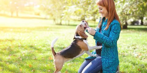 5 Ways to Protect Your Pet From Spring Allergies, Fairport, New York