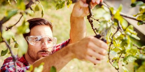 Tree Care Do's & Don'ts to Promote Growth, Sparta, Georgia