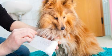 3 Steps for Treating a Cut on Your Dog's Paw Pad, Clarksville, Maryland