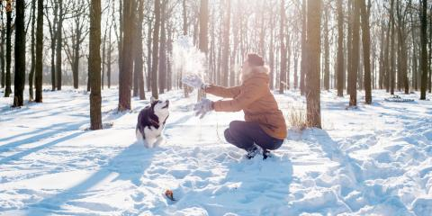 3 Steps for Protecting Dogs From Winter Weather, Lincoln, Nebraska