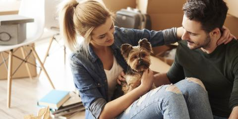 5 Tips for Keeping Pets Calm While Moving, Sedalia, Colorado