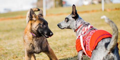 3 Tips on Socializing Your Dog, Honolulu, Hawaii