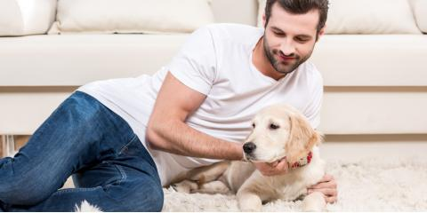 3 Carpet Cleaning Tips for Managing Pet Hair, Waihee-Waikapu, Hawaii