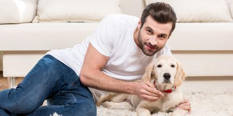 3 Essential Pet Supplies for Keeping Your Dog or Cat Groomed & Healthy, Bethel, Ohio