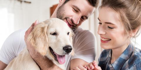 3 Qualities Dogs Love in a Pet Boarding Facility, Avon, Ohio