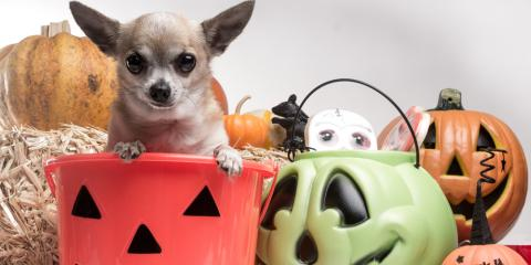 Pet Care Experts Explain Why You Shouldn't Let Your Dog Eat Halloween Candy, Covington, Kentucky