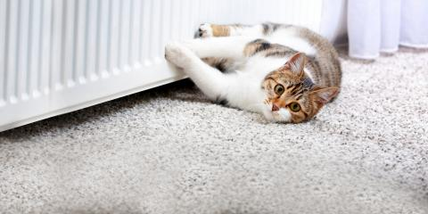 Own a Cat? 3 Tips for Preventing Carpet Stains, Waldoboro, Maine