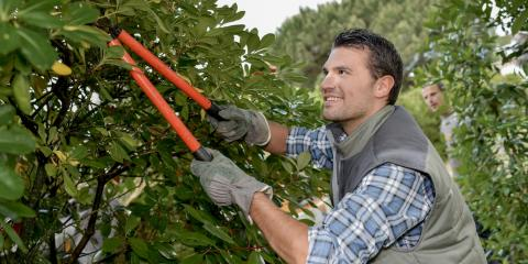 5 Must-Have Tree Trimming Tools, Kalispell, Montana