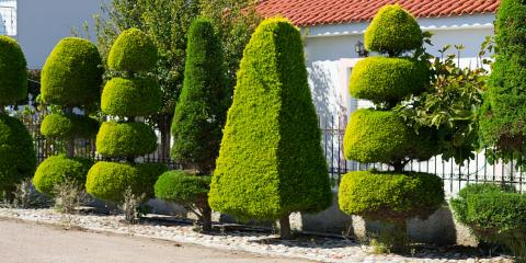 5 Shrubs to Plant By a Fence for Privacy, Deep River, North Carolina