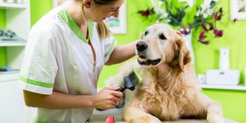 How to Prevent Your Dog's Fur From Matting, Lincoln, Nebraska