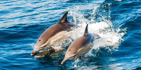 4 Tips for Taking Photos on a Dolphin Excursion, Waianae, Hawaii